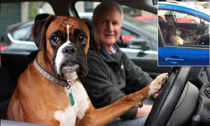 Dog sounds car horn for 15 minutes while waiting for owner #DailyMail