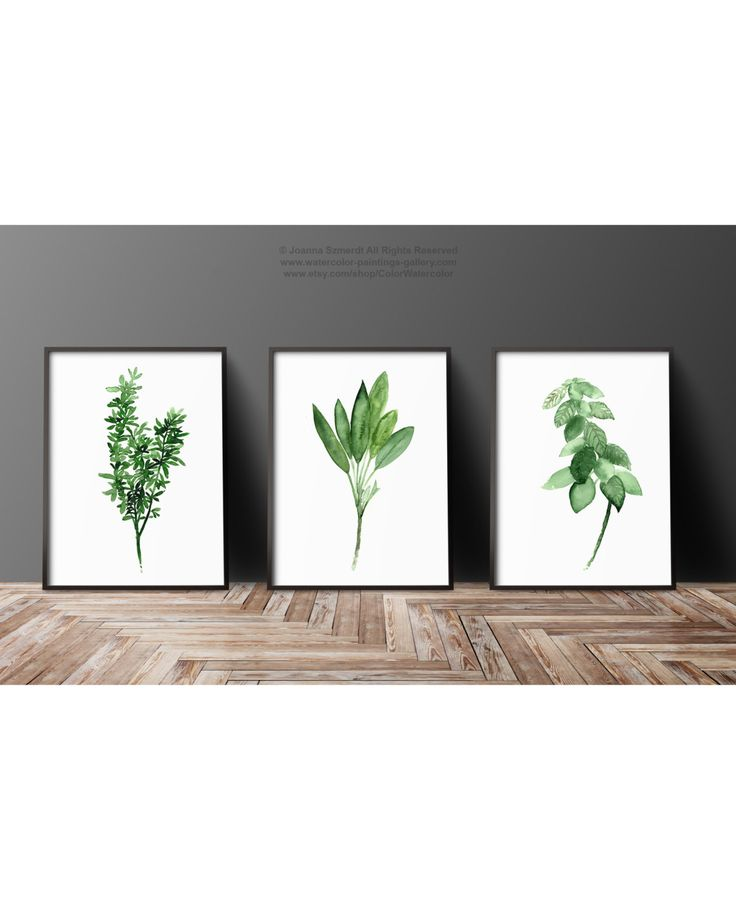 Thyme Watercolor Painting, Sage Art Print, Basil Herb Kitchen Decor Green Wall Illustration, Set 3 different Herbs Medicinal Plants Chart by ColorWatercolor on Etsy #thyme #basil #sage