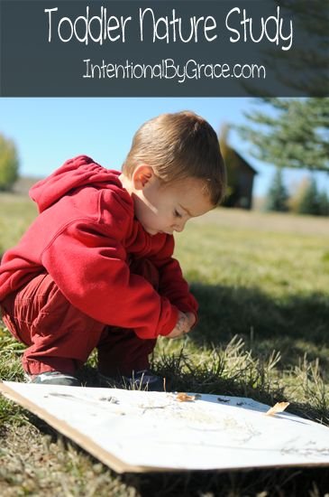 Toddler Nature Study - easy to do each season of the year!