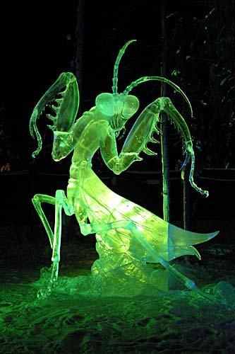 "Bugberg: This photo released by Ice Alaska shows ""Aiming Eyes,"" an ice sculpture of a praying mantis from the 2007 World Ice Art Championships in Fairbanks. This year's contest began Tuesday."
