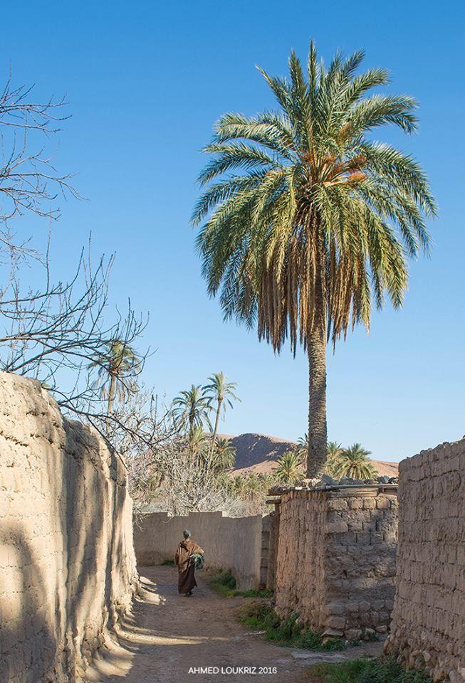 394 Best Marano Gomez Scott Talerico Coleman Cameron: 394 Best Bousaâda. Algérie. Des Photographies Anciennes De