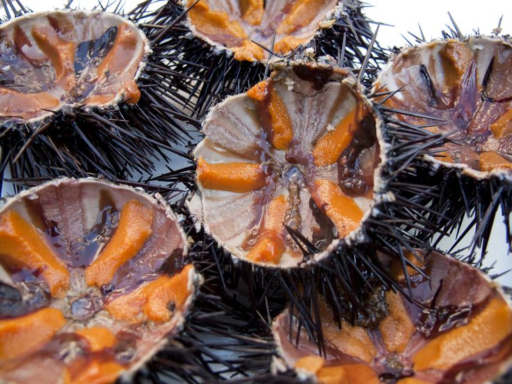 Sea urchin or ricci di mare, Puglia
