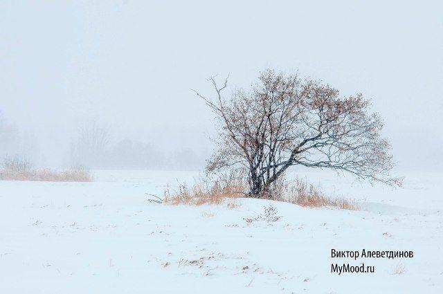 Снег и одинокое дерево в поле, метель. Первый снег декабря