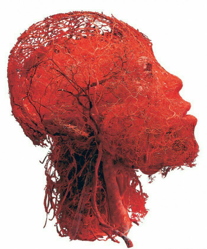 All of the blood vessels in the head - 9GAG