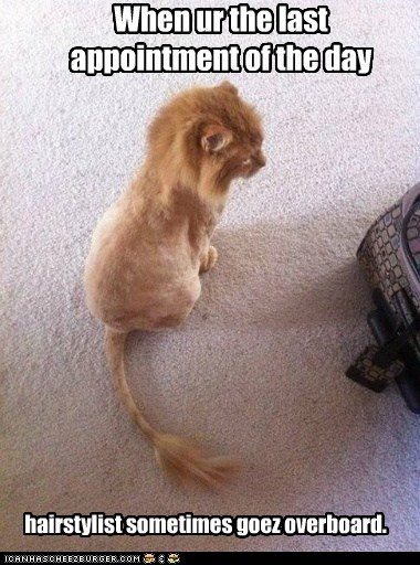hahahHaircuts, Orange Cat, Lion Cat, Hair Cut, Lion King, Kittens, Baby Lion, Kitty, Animal