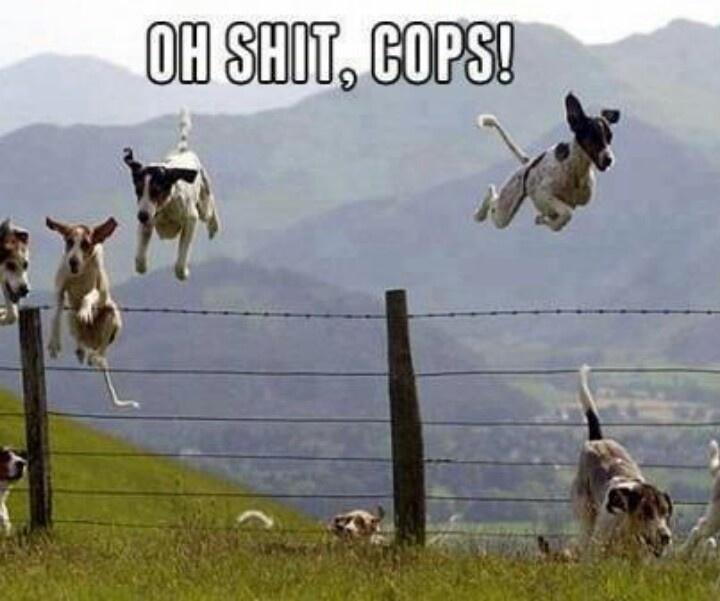 Cops!