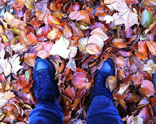 Autumn Leaves | Flickr - Photo Sharing!