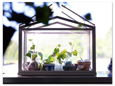 Grow Herbs and spices close to your kitchen door. The SOCKER greenhouse is a perfect size to start your own little herb heaven from your windowsill, balcony, shed, anywhere!