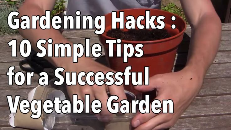 Gardening Hacks - 10 Simple Tips For A Successful Vegetable Garden... - http://www.ecosnippets.com/gardening/gardening-hacks/