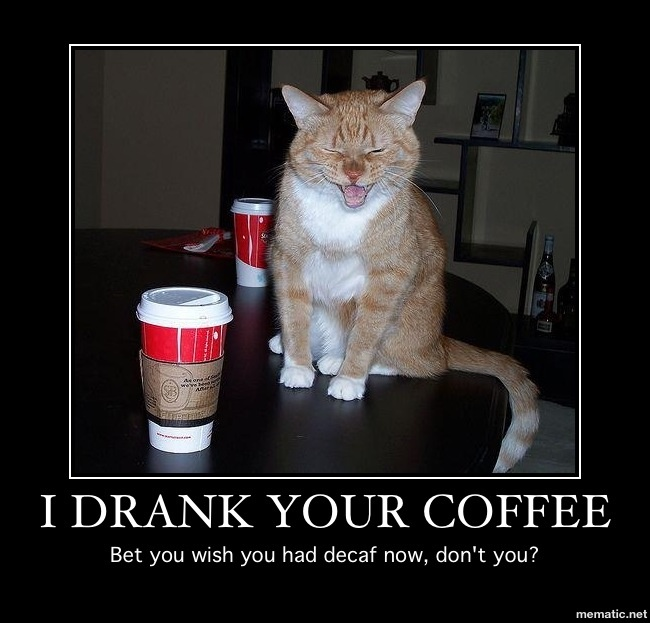 Funny Cat Drinking Meme : Best cats coffee images on pinterest