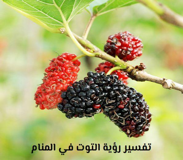 تفسير رؤية التوت في المنام لابن سيرين والنابلسي موقع مصري Morus Fruit Trees Fruit