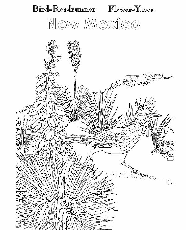 pinon tree coloring pages | 51 best images about New Mexico Unit on Pinterest ...