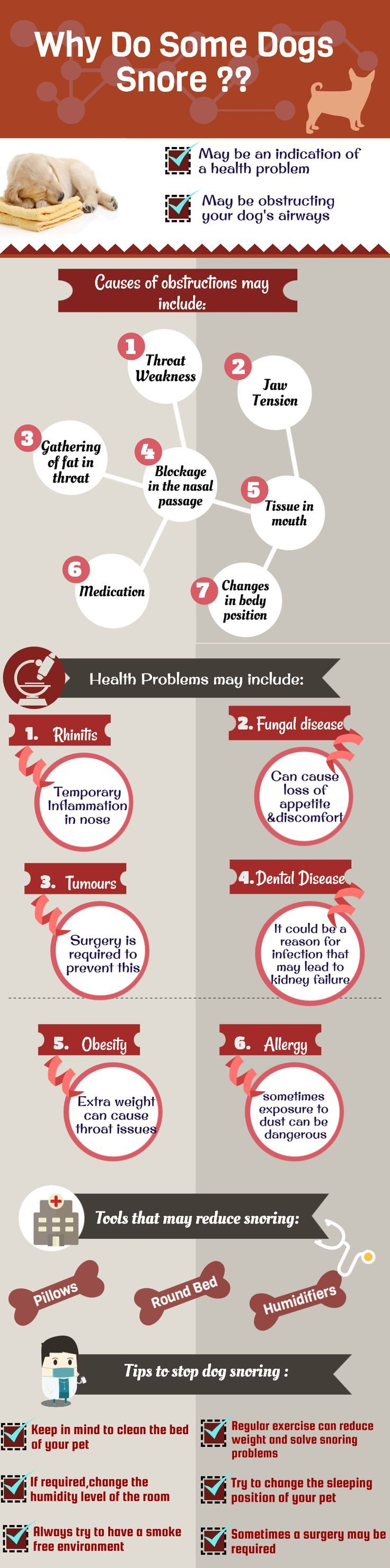 This is a vital info-graphic image for all Dog owners. It's about Dog health issues and their causes. Some Dogs normally show some indication which clarifies that those are suffering from health problems.   Pug Facts