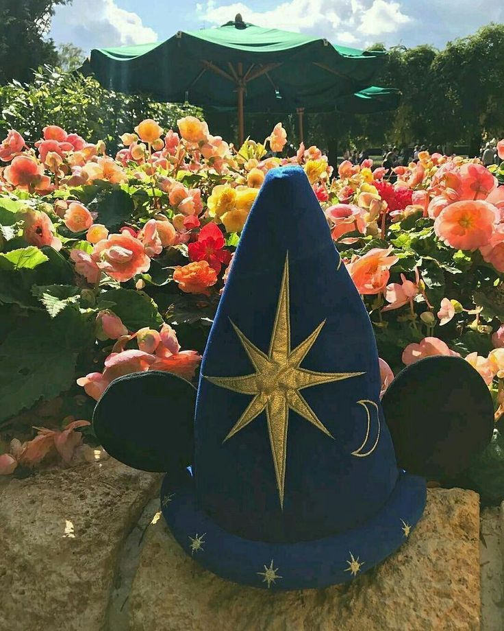 Que hermosa foto en DisneyLand París! Gran ángulo Kévin! Esta genial fotografía pertenece a @kevin_vandekamp Muchas Gracias! #Disneyland #Paris #Viaje #ParqueTemático #Disney #EuroDisney #Turismo #Europa #Mickey #Viajeros #HermososMomentos #Flores #Disneylandia
