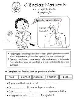 BAUZINHO DA WEB - BAÚ DA WEB : Atividades sobre o sistema respiratório para imprimir