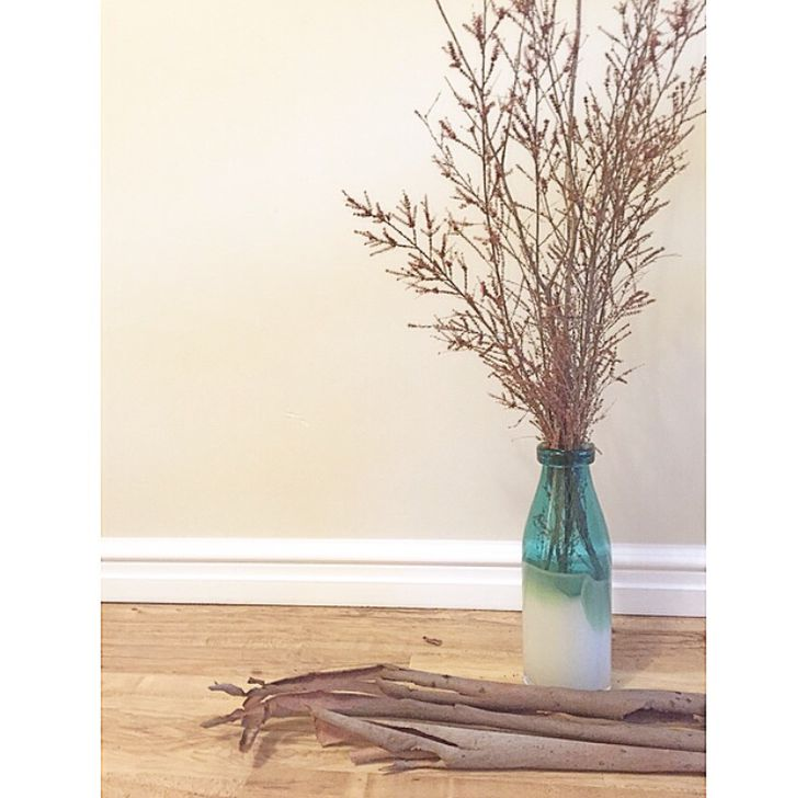 Found these dried branches on my walk, filled my mums vases with them
