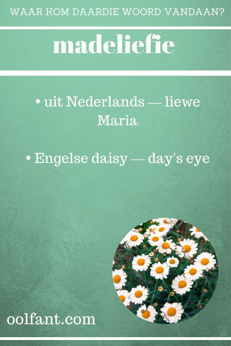 madeliefie | Afrikaanse woorde | daisy