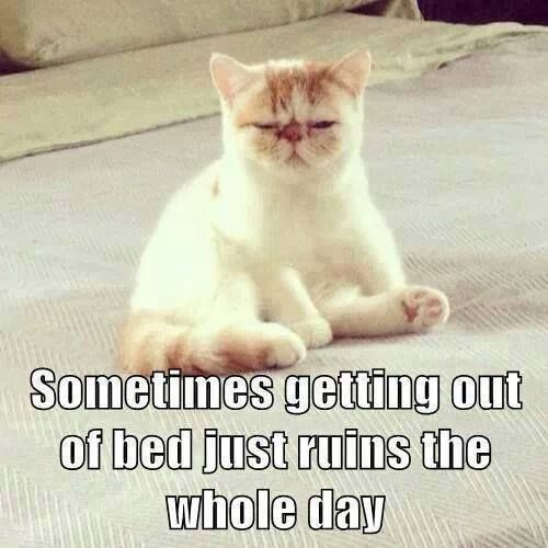 cat meme 008 getting out of bed