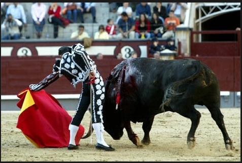 matador gay singles Will this matador's death kill bullfights let's hope so, says david jones who can earn £400,000 for a single afternoon in the ring.