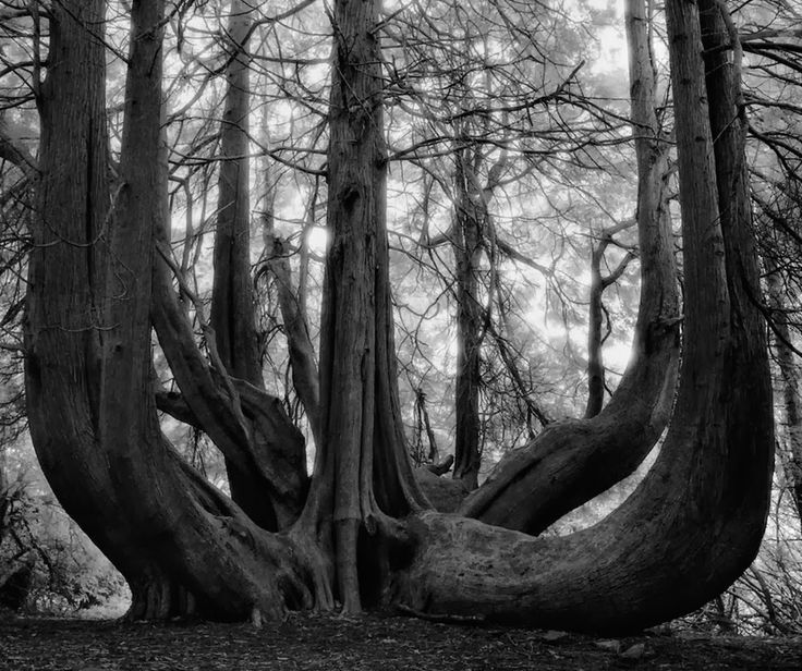The World's Beautifully Rare And Ancient Trees - creative design by God, photography by Beth Moon