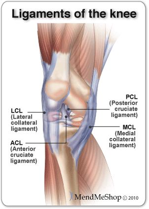 Image result for knee with ligaments and abbreviations in diagram