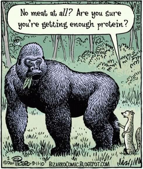 LOL love this because 99% of people actually believe you get all your protein from meat.