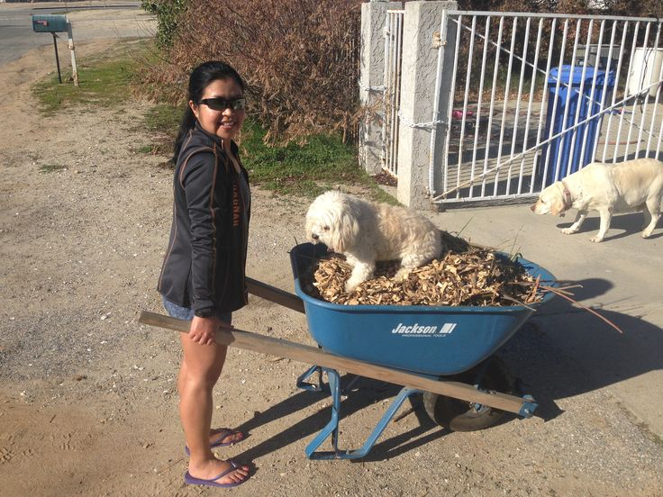 Everyone helps on the farm!  Our service dogs give mommy a hand with the Mulch for the garden. (It's also a good workout!)