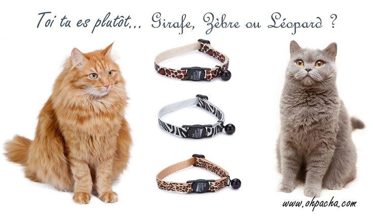Grrr… Vos Pachas sortent les griffes avec ces colliers « sauvages » à retrouver dans notre boutique en ligne: http://www.ohpacha.com/43-collier-pour-chat