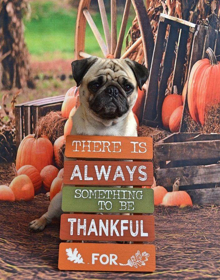 Pet Shop Clipart Pets Clipart Pet Elements Clipart Dog Shop