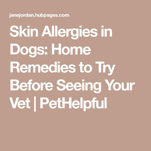 Skin Allergies in Dogs: Home Remedies to Try Before Seeing Your Vet   PetHelpful