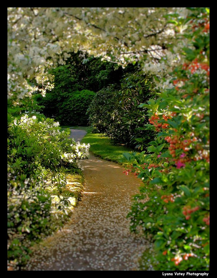Flower Garden Path 16 best garden paths images on pinterest | garden paths, garden