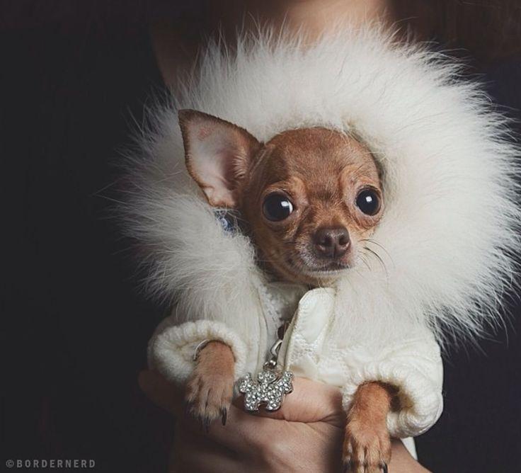 Posh pup.