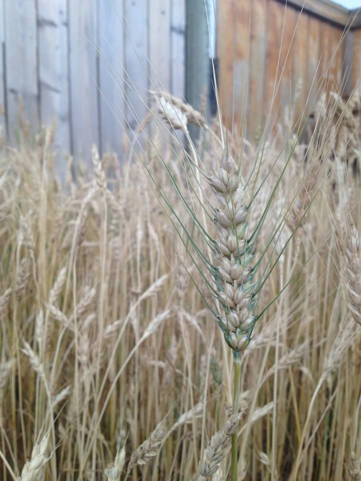 ABC's of Urban Farming - an interview with Calgary's Jason Melenberg
