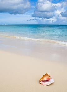 Nude beach clearwater Nude Photos 52