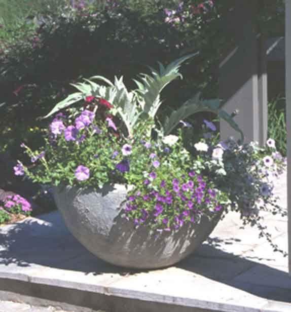 ottawa specialty nursery featuring perennials pond plants perennials and trees u0026 shrubs