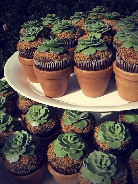 1000 Images About Cakes Cactus Southwest On Pinterest