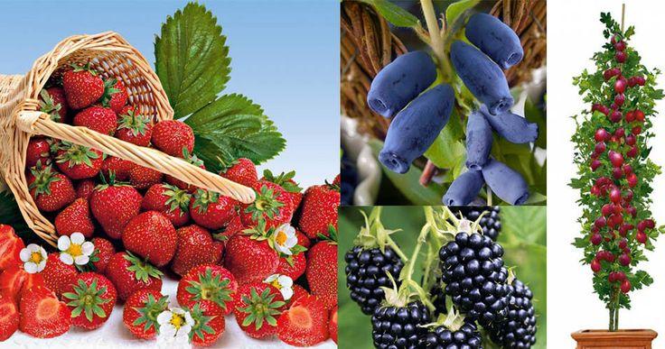 Plante fructifere și plante de cultură - http://ideidesigninterior.ro/plante-fructifere-si-plante-de-cultura/