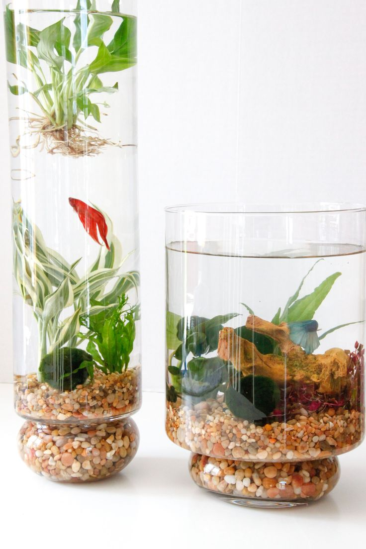 DIY: Indoor Water Garden Full step by step instructions! Simple to make and up keep.