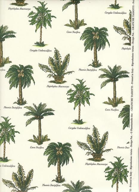 1000 images about plant and palm tree ideas for for Garden trees types