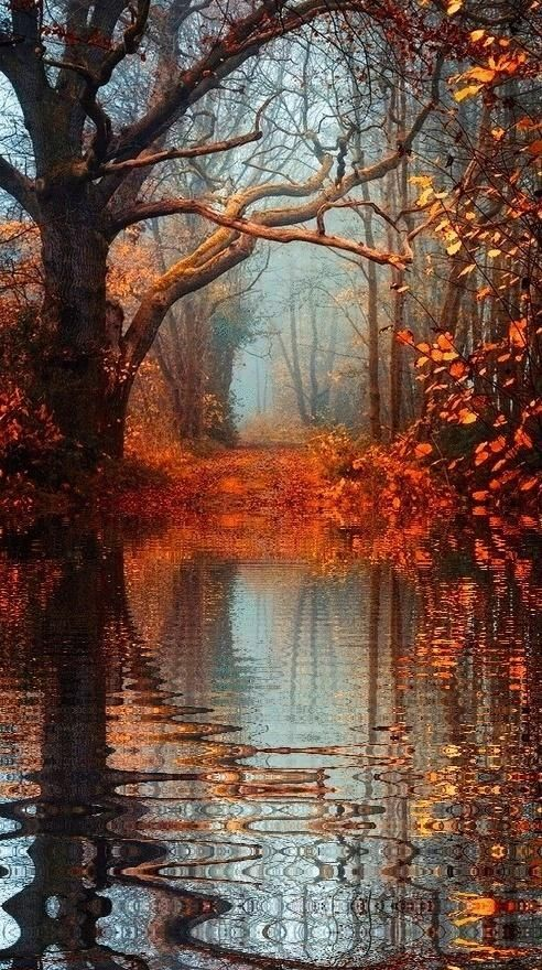 Fall in the forest.