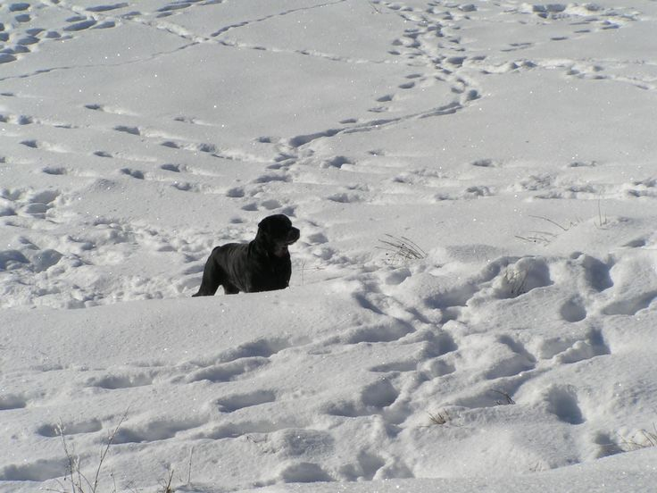 A black dot in the white snow.