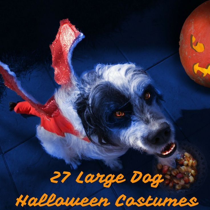 Best 25+ Large dog halloween costumes ideas on Pinterest ...