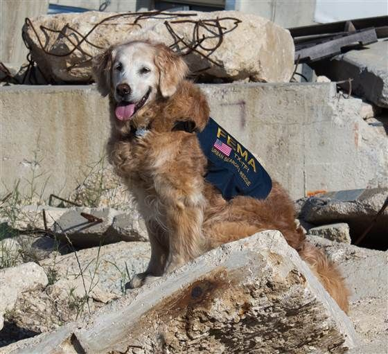 15-year-old golden retriever named Bretagne, and she's believed to be the last surviving search dog who worked at Ground Zero in New York City after the Sept. 11, 2001 terrorist attacks. (One other surviving search dog from 9/11, a 15-year-old English springer spaniel named Morgan, worked at Staten Island.)