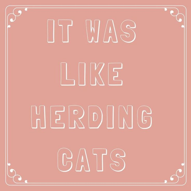 It Was Like Herding Cats - 63 Sayings You Learned From Your Southern Grandma  - Southernliving. Have you ever tried to herd cats?