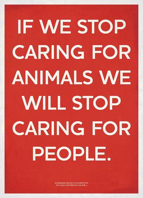 <3 animals: Animalswild Animal, Animal Care, Vegan Quotes, Animal Advocacy, People Helpful Animal, Animal Quotes, Thoughts Exactly, Baby Animal, Care Bekindtoanim