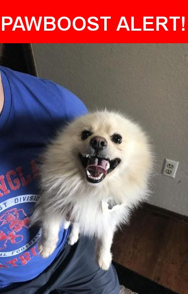 Is this your lost pet? Found in Oklahoma City, OK 73159. Please spread the word so we can find the owner!  Blond pomerian, tag says he is a service dog. Tried calling the number but no answer and mailbox is full.  Nearest Address: Near Southridge Dr & Southridge Ter