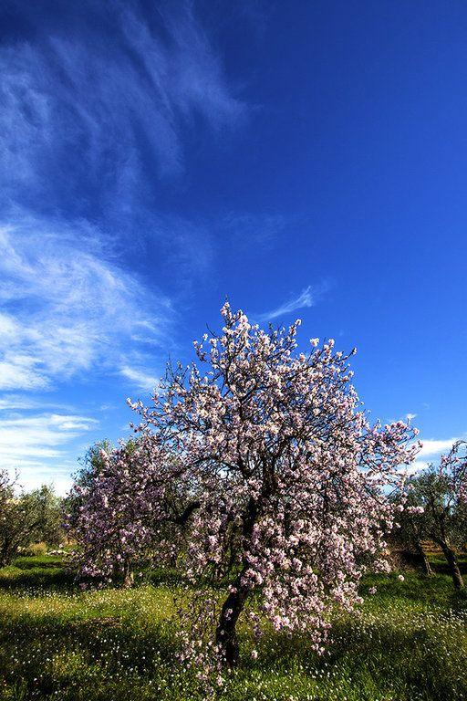 Campagna Alberi in fiore - Murge - Ph. Benny Maffei
