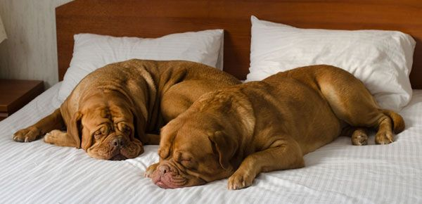 14 Dog-Friendly Hotels and Motels to Stay at This Holiday Season.