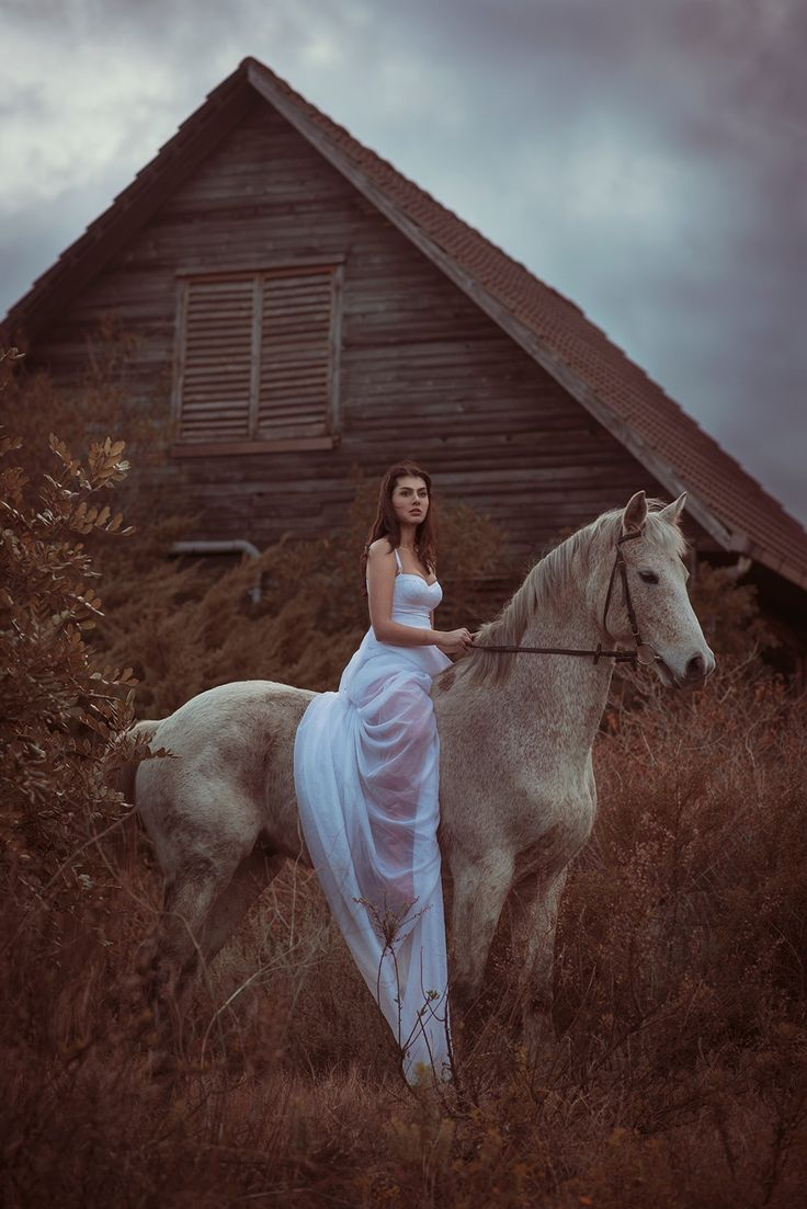 Horse's house - null