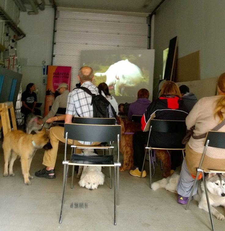 Koirien leffaillassa Oulun taidemuseon autotallissa oli välillä ruuhkaa. Illan mittaan elokuvissa kävi yli kolmekymmentä koiraa. Oulu (Finland)
